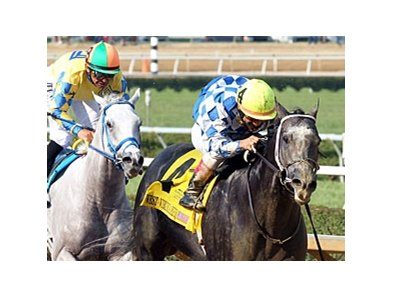 Macho Macho won the 2012 West Virginia Derby.