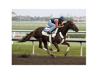 Training at Palm Meadows
