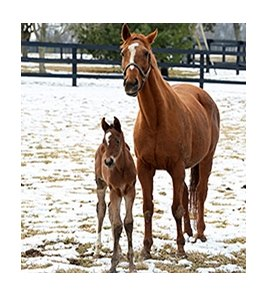 Mining My Own, dam of Mine That Bird and Dullahan, and her foal by Bodemeister.