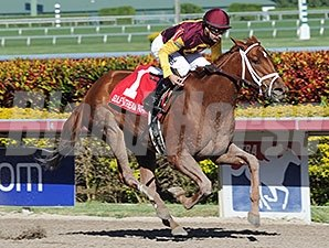 Sweet N Discreet won the 2014 Florida Sunshine Millions Distaff Stakes.