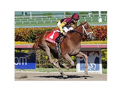 "Sweet N Discreet won the 2014 Florida Sunshine Millions Distaff Stakes.<br><a target=""blank"" href=""http://photos.bloodhorse.com/AtTheRaces-1/At-the-Races-2014/35724761_2vdnSX#!i=3029334962&k=jL5nrcm"">Order This Photo</a>"