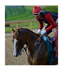 "California Chrome jogged a little before 7:00 a.m. EDT.<br><a target=""blank"" href=""http://photos.bloodhorse.com/TripleCrown/2014-Triple-Crown/Kentucky-Derby-Workouts/i-qnTbDMV"">Order This Photo</a>"