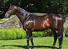 Scat Daddy Sire of Top 4 in Chilean Group I