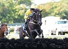 "Demonstrative won the 2014 Steeplechase Eclipse Award.<br><a target=""blank"" href=""http://photos.bloodhorse.com/AtTheRaces-1/At-the-Races-2014/i-rPxNMmx"">Order This Photo</a>"