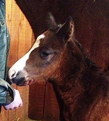 First Two Foals by Sire Caleb's Posse Arrive