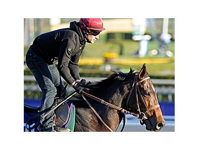 "Mexikoma<br><a target=""blank"" href=""http://photos.bloodhorse.com/BreedersCup/2013-Breeders-Cup/Breeders-Cup/32986083_QMHXWK#!i=2871567258&k=HbbWR6r"">Order This Photo</a>"