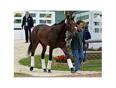 "Ria Antonia was one of the Preakness contenders who arrived on May 14.<br><a target=""blank"" href=""http://photos.bloodhorse.com/TripleCrown/2014-Triple-Crown/Preakness-Stakes-139/i-gNXccKd"">Order This Photo</a>"