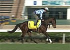 Hong Kong International Racing - Lord Kanaloa