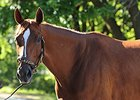 "Princess of Sylmar <br><a target=""blank"" href=""http://photos.bloodhorse.com/AtTheRaces-1/At-the-Races-2014/i-Z6m3bVv"">Order This Photo</a>"