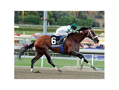 "Mucho Macho Man <br><a target=""blank"" href=""http://photos.bloodhorse.com/BreedersCup/2013-Breeders-Cup/Classic/33150031_7ZnLk4#!i=2883094903&k=6hpxVVd"">Order This Photo</a>"