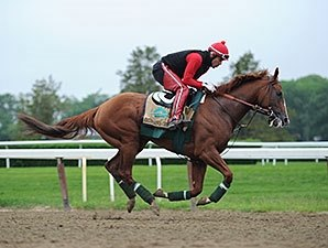 California Chrome on Schedule at Belmont Park