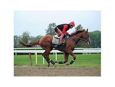 "California Chrome jogged at Belmont Park on May 28. <br><a target=""blank"" href=""http://photos.bloodhorse.com/TripleCrown/2014-Triple-Crown/Belmont-Stakes-146/i-4QGg4Z8"">Order This Photo</a>"