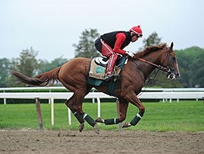 California Chrome jogged at Belmont Park on May 28.