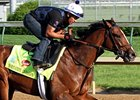 "Normandy Invasion <br><a target=""blank"" href=""http://photos.bloodhorse.com/TripleCrown/2013-Triple-Crown/Kentucky-Derby-Workouts/29026796_jvcnn8#!i=2488102563&k=hCMxPG6"">Order This Photo</a>"