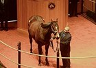Hidden Expression sold for $360,000 on Feb. 10.