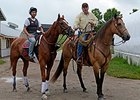 Wise Dan and His Quarter Horse Buddy Donnie