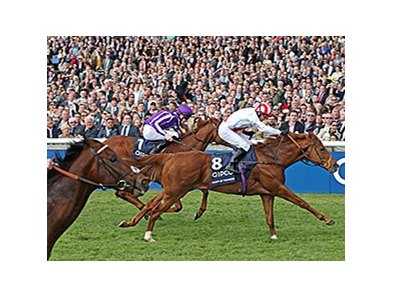 "Night of Thunder gets up late to win the QIPCO Two Thousand Guineas.<br><a target=""blank"" href=""http://photos.bloodhorse.com/AtTheRaces-1/At-the-Races-2014/i-jKTPVdX"">Order This Photo</a>"