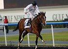 "Toast of New York makes his first start since winning the UAE Derby March 29.<br><a target=""blank"" href=""http://photos.bloodhorse.com/AtTheRaces-1/Dubai-2014/38085033_tQgx4h#!i=3148677182&k=DzqBPC4"">Order This Photo</a>"