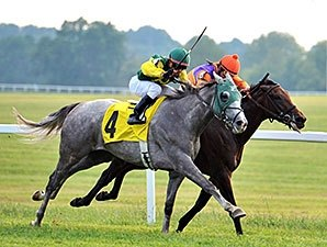 My Afleet Tops Medal Count At Kentucky Downs Bloodhorse