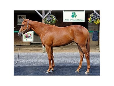 Hip No. 450, a chestnut filly by Speightstown, was one of two 2yos that brought $425,000.