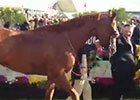 California Chrome Exits the Winner's Circle