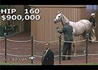 Keeneland September Yearling Sale 2014 - Hip 160
