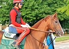"California Chrome <br><a target=""blank"" href=""http://photos.bloodhorse.com/TripleCrown/2014-Triple-Crown/Belmont-Stakes-146/i-WV42fNR"">Order This Photo</a>"