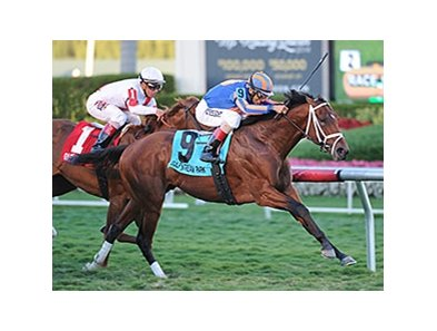 Gala Award wins the Palm Beach Stakes.