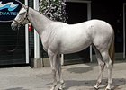 Second Tapit Filly Cracks Seven-Figure Mark
