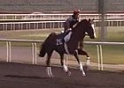 Dubai Carnival: Morning Training 03/07/2013 Part 1
