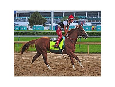 "California Chrome<br><a target=""blank"" href=""http://photos.bloodhorse.com/TripleCrown/2014-Triple-Crown/Kentucky-Derby-Workouts/i-SVLtj34"">Order This Photo</a>"
