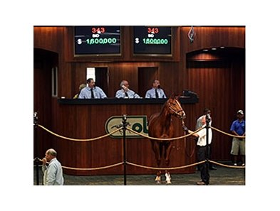 Hip No. 343, a chestnut colt by Giant's Causeway was one of two horses sold for $1.6 million dollars.