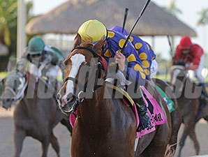 Sing Praises won the 2014 Florida Sire Dr. Fager Stakes, the first leg of the Florida Sire Stakes series.