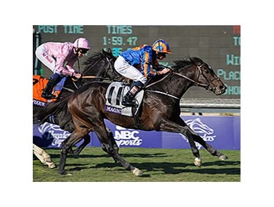 "2013 Breeders' Cup Turf winner Magician is back for 2014.<br><a target=""blank"" href=""http://photos.bloodhorse.com/BreedersCup/2013-Breeders-Cup/Turf/33149938_WkWzN9#!i=2902211206&k=btn6Wwk"">Order This Photo</a>"