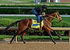 Wildcat Red jogs at Churchill Downs.