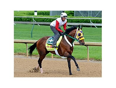 "Uncle Sigh <br><a target=""blank""http://photos.bloodhorse.com/TripleCrown/2014-Triple-Crown/Kentucky-Derby-Workouts/i-Tq6RJ6V"">Order This Photo</a>"