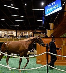 Lookin At Lucky Filly Tops New York-Bred Sale