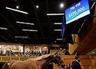 Hip 436 by Lookin At Lucky sold for $270,000 at the Fasig-Tipton New York-bred Yearling Sale.