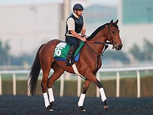 Twilight Eclipse jogs at Meydan March 24, 2014.