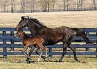 Delta Princess shown with her 2009 Empire Maker colt, future grade II stakes-placed Empire Way.