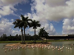Hialeah May Push for Thoroughbred License