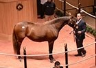 Fasig-Tipton November Sale 2013 Recap