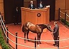 F-T July: Hip 110 Unbridled's Song Colt in Ring