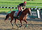 "California Chrome at Belmont Park on June 6. <br><a target=""blank"" href=""http://photos.bloodhorse.com/TripleCrown/2014-Triple-Crown/Belmont-Stakes-146/i-4qKFP4b"">Order This Photo</a>"