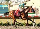 American Pharoah Rolls in Del Mar Futurity