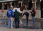 California Chrome the Morning After KY Derby