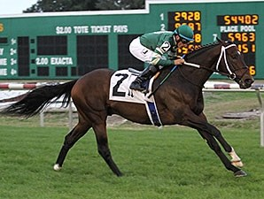 Daddy Nose Best won the Buddy Dilberto Memorial Handicap at Fair Grounds on Dec. 21.