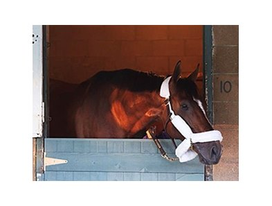 Mucho Macho Man arrived for the Big 'Cap Feb. 23.