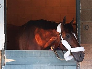 Mucho Macho Man arrives at Santa Anita.
