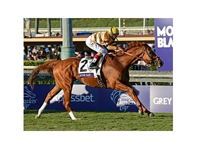 "Wise Dan will look to defend his title in the 2013 Breeders' Cup Mile. <br><a target=""blank"" href=""http://photos.bloodhorse.com/BreedersCup/2012-Breeders-Cup/Mile/26128708_Rzcb63#!i=2194067782&k=GbNqMRD"">Order This Photo</a>"